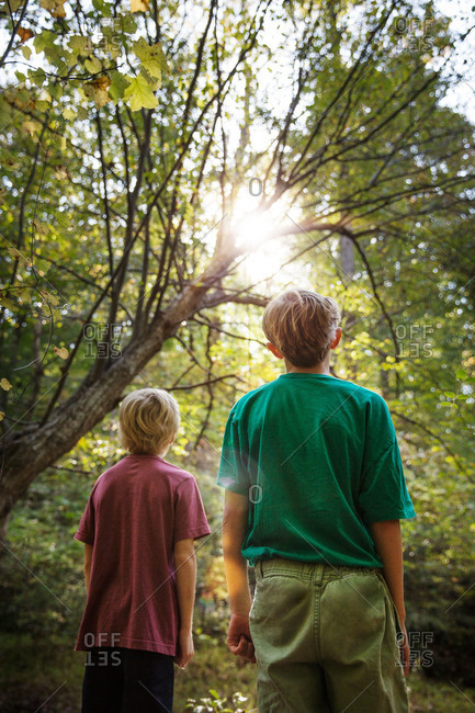 Two young boys looking up at the sun shining through trees