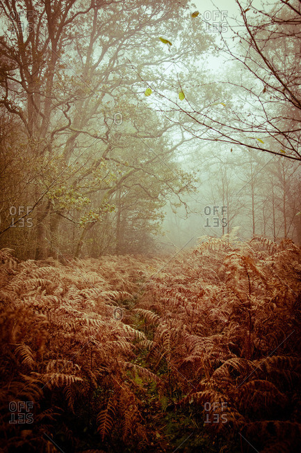 Plants and trees in a foggy forest
