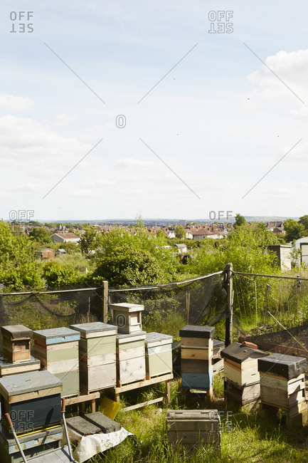 A collection of beehives in the corner of an allotment in a city.