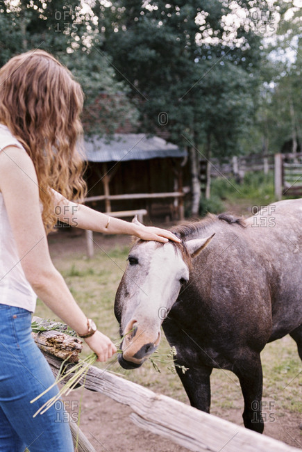 Woman feeding a horse in a paddock.