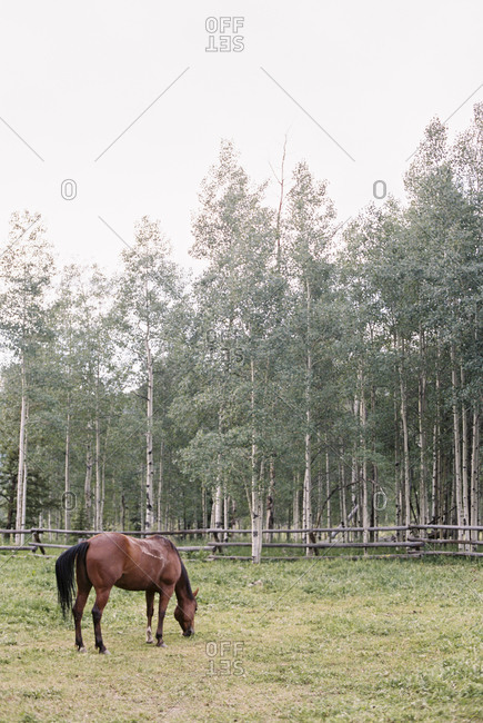 Brown horse grazing in a paddock on a ranch.