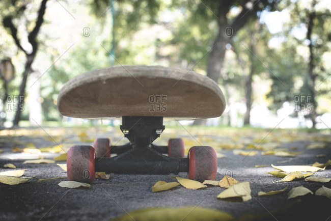 Skateboard in park in autumn