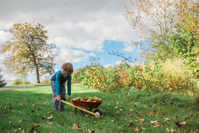 Boy with wheelbarrow of apples