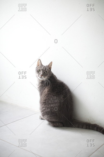 Cat looking with curiosity - Offset