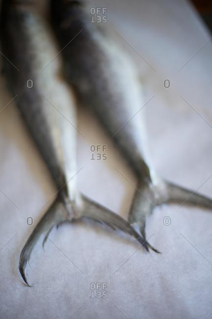 Mackerel fish tails