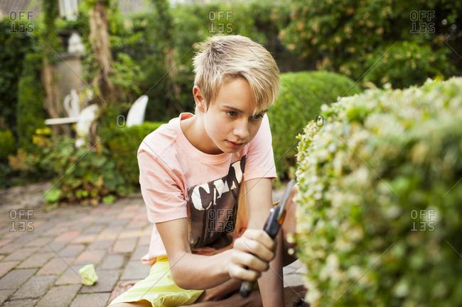 Boy carefully shapes hedges in garden