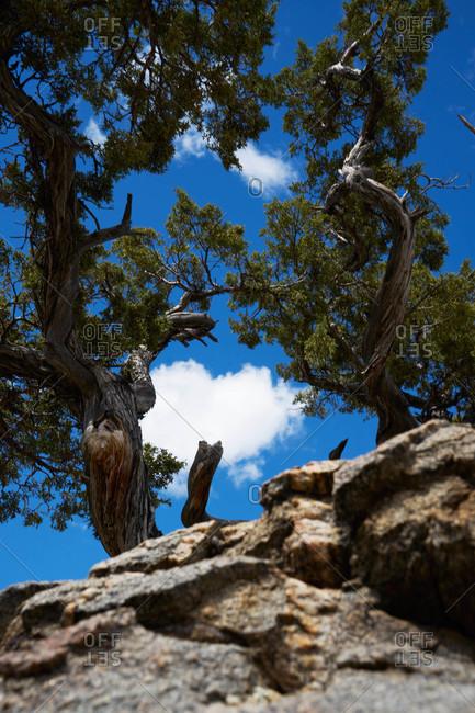 Gnarled tree growing on rocks