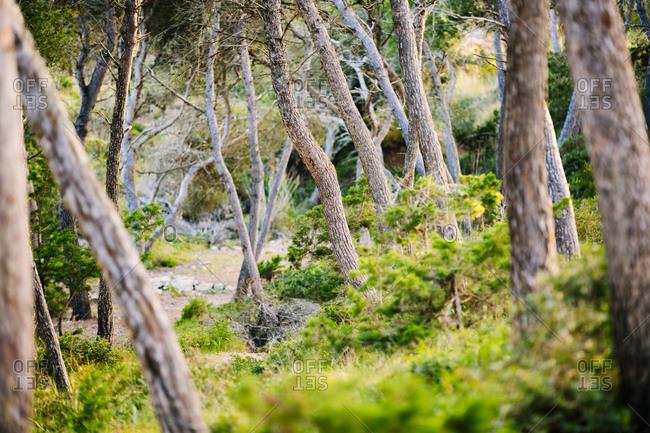 Stream through pristine Spanish woods