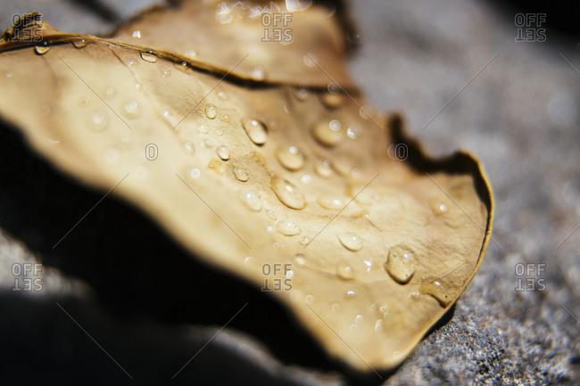 Water droplets on fallen leaf