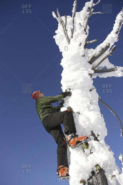 Ice climber climbing a frozen tree called a snowghost
