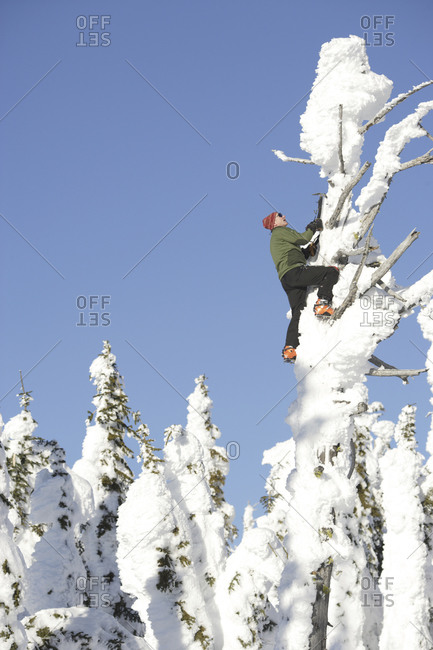 Ice climber on a frozen tree called a snowghost