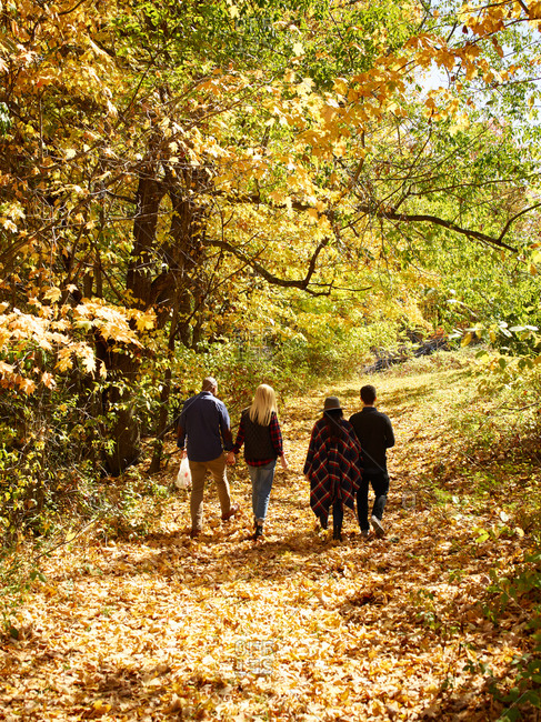 Two couples walking through the fallen leaves at an apple orchard