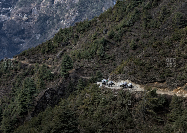 Pack animals on hiking trail, Khumbu