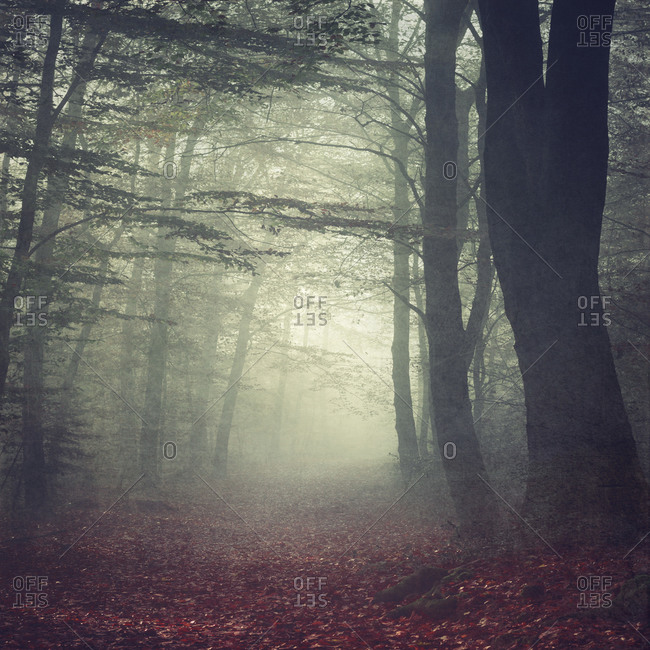 Forest path in the morning mist