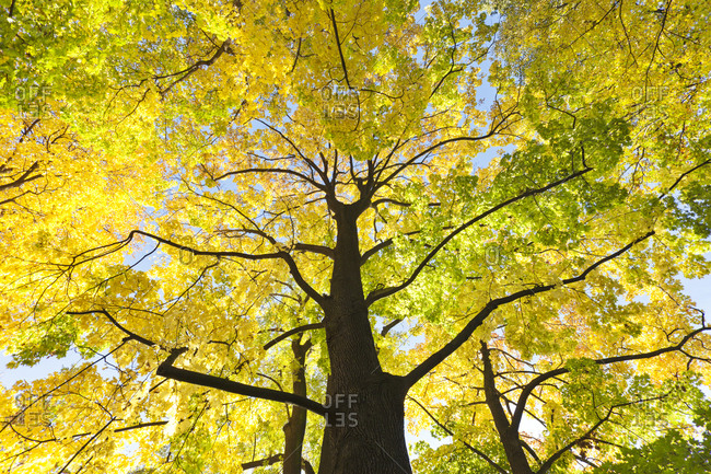 Tree in Grosser Garten, Dresden