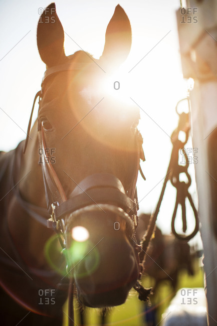 Portrait of a horse in sunlight