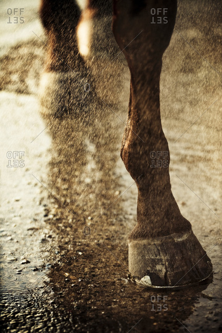 Hooves of a horse getting washed