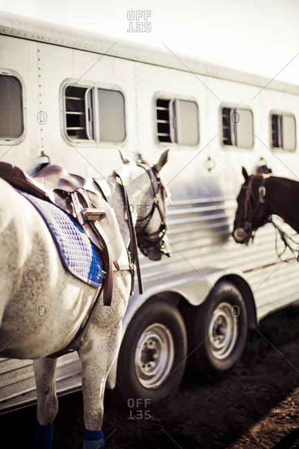 Two horses standing next to trailer