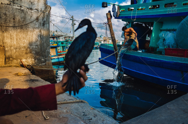 Phu Quoc, Vietnam - November 9, 2015: Cormorant in man's hand by boats, Vietnam