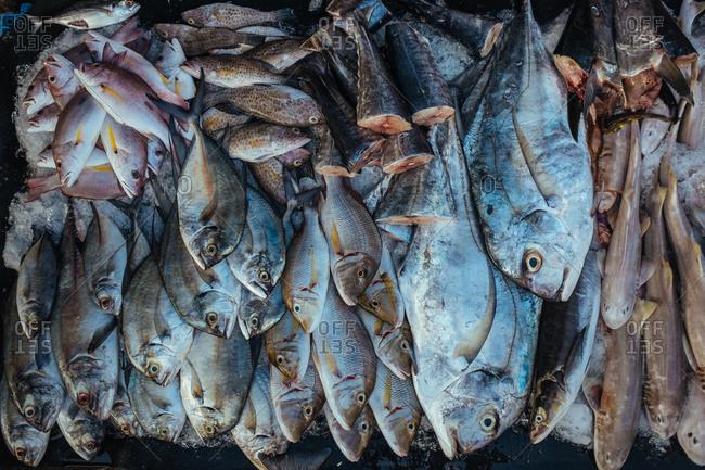 Fish in market, Phu Quoc Island, Vietnam