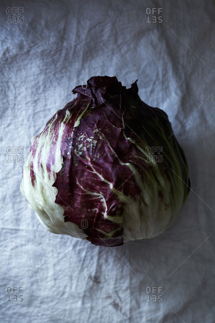 Head of cabbage on a light background