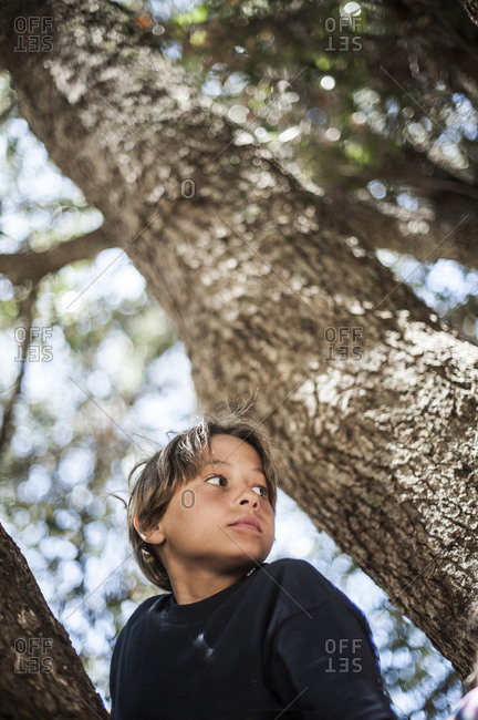 Portrait of a boy among tree branches