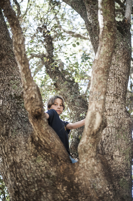 Boy sitting in the fork of a large tree