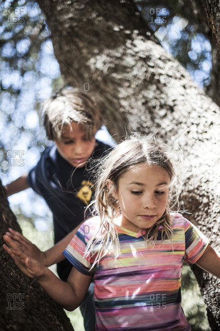 Brother and sister playing in a tree
