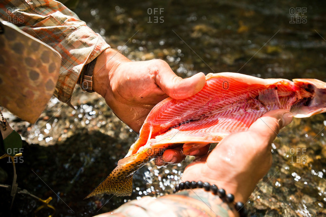 A fly fisherman cleans his catch