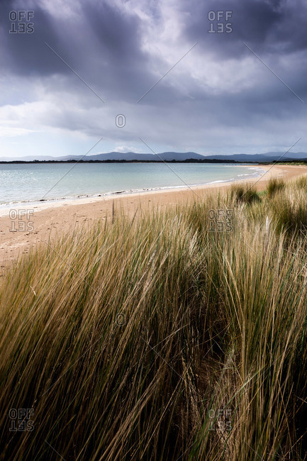 Storm clouds and a wind swept grass in Tasmania