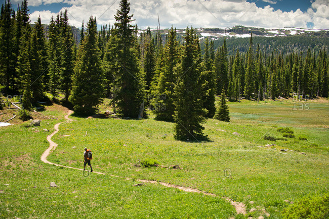 A backpacker hiking down a trail through a mountain meadow on a sunny day in Yampa, Colorado.