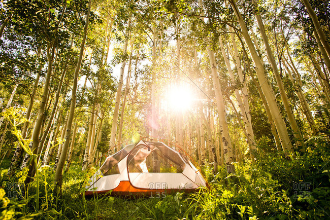A tent sits in the morning sun shining through an Aspen grove in Yampa, Colorado.