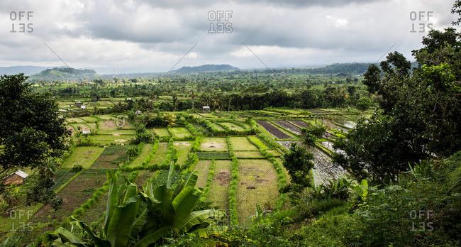 Rice Fields of Amed in the Karangasem Regency of Bali, Indonesia