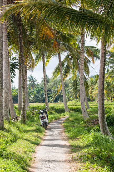Single track path leading to the rice fields outside of Ubud, Bali, Indonesia
