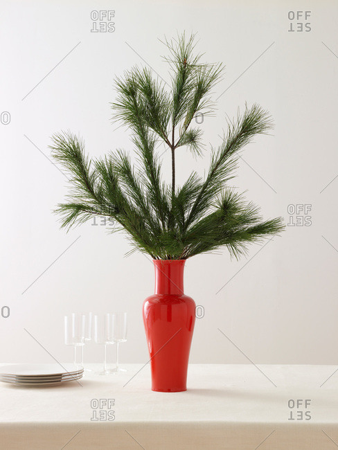Pine branches in a red vase