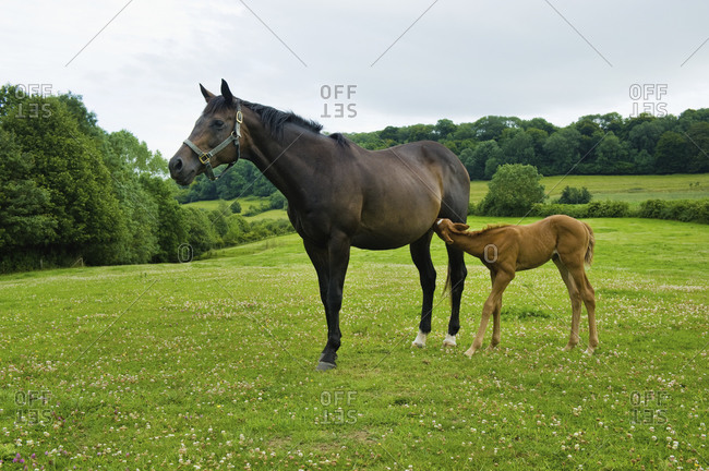 A horse and foal in a field