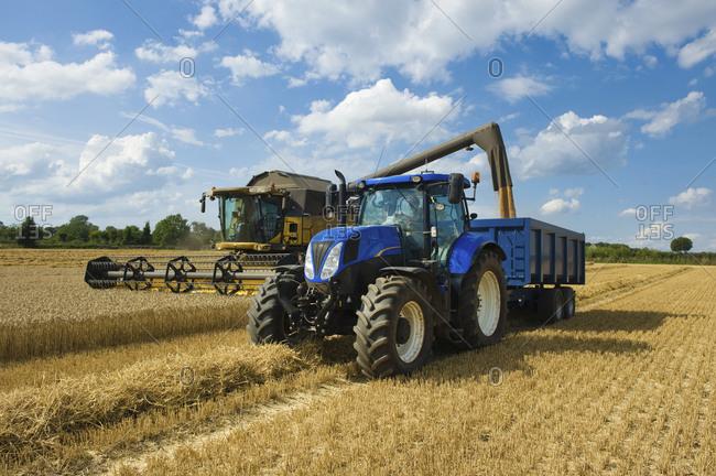Combine harvester delivering harvested grain onto a grain trailer on a farm