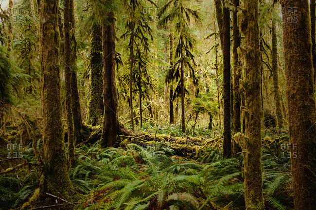 Woods with fern covered floor