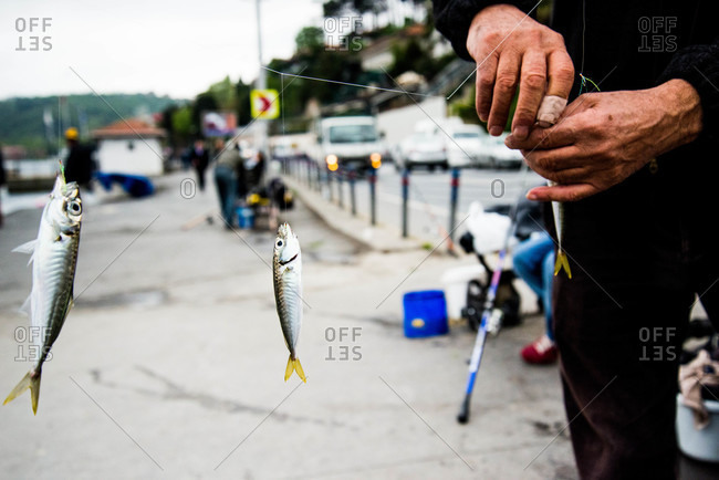 Man tying small fish to line, Istanbul
