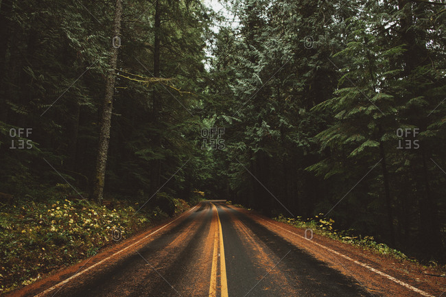 Wet road covered in pine needles through forest in Pacific Northwest