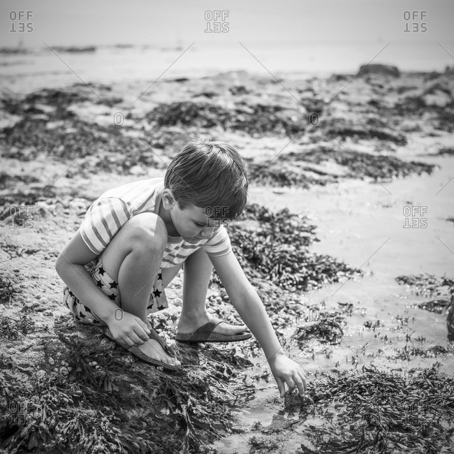 Young boy investigating a tide pool