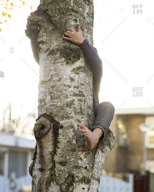 Child's arm and leg wrapped around a tree trunk
