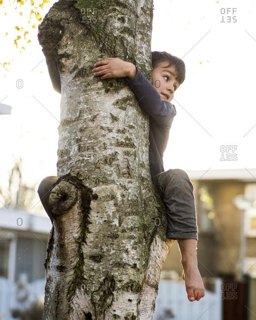Boy climbing up a tree trunk in backyard