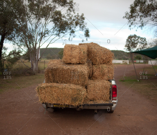 Back view of a pickup truck loaded with hay