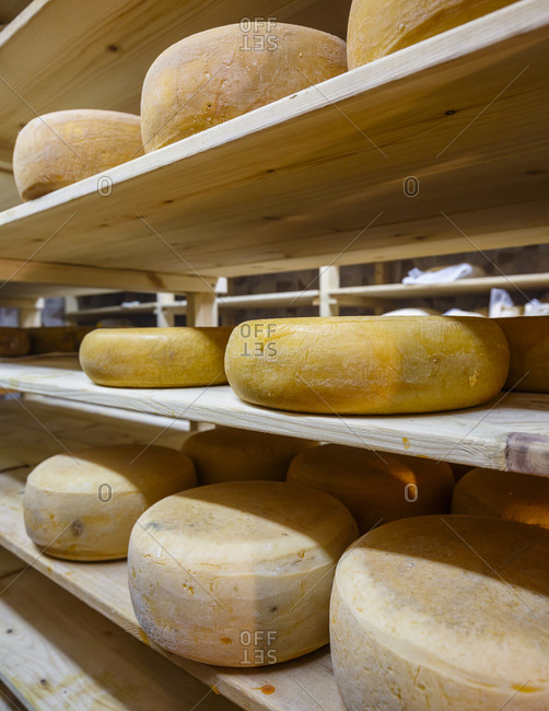 Wheels of cheese aging on shelves at dairy farm