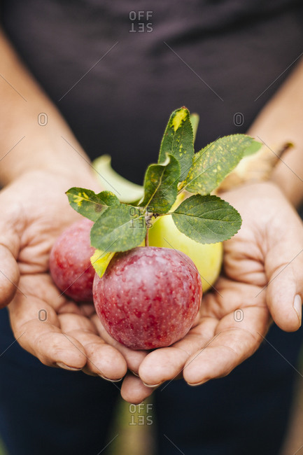 Man holding three fresh apples