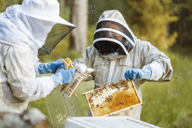 Beekeeper holding honeycomb while working with colleague on field