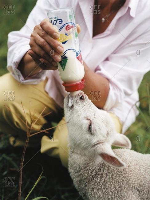 Person feeding a lamb