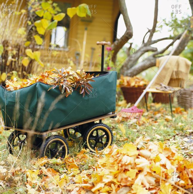 Garden cart full of autumn leaves