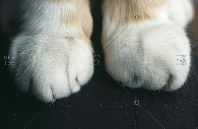 Cat s paws on black surface, close-up